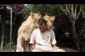 Kärleksfulla lejon