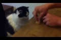 Smart Katt
