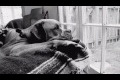 HAPPY DOGS, SAD DOGS commercial