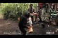 Ape Goin Wild With An Ak-47!